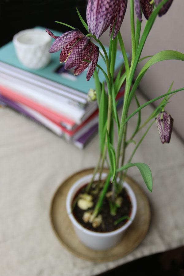 Schachbrettblume mit Interior Design Bücher